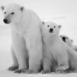 bears fam